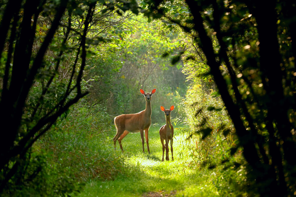 Deer on trail in Wisconsin state park: things to do